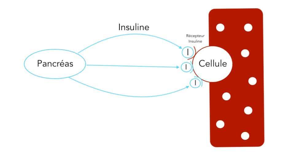 Résistance à l'insuline - Santé d'Acier