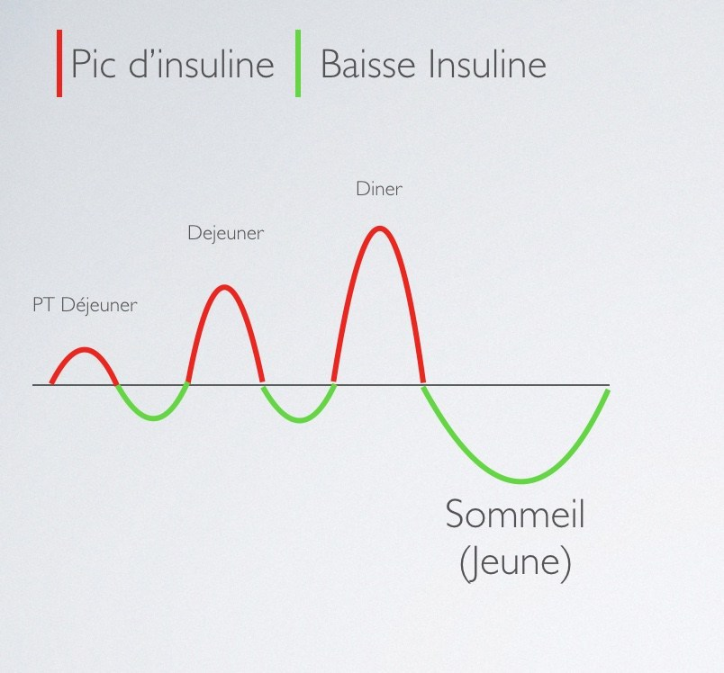 Sécrétion d'insuline à 3 repas par jour - Santé d'Acier
