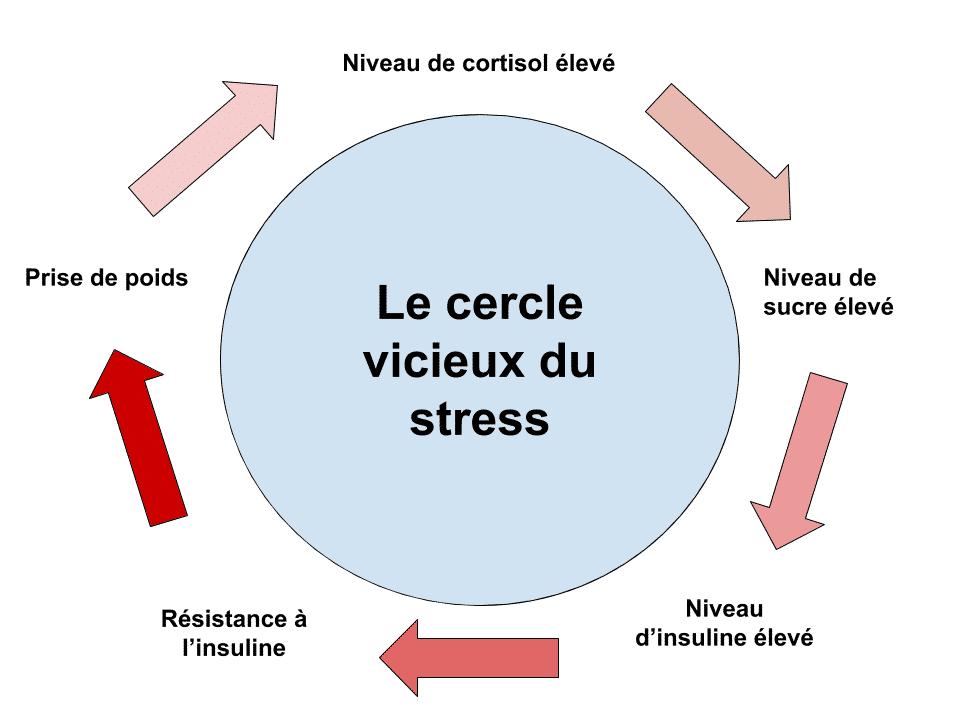 Comment le stress fait prendre du poids - Sante d Acier