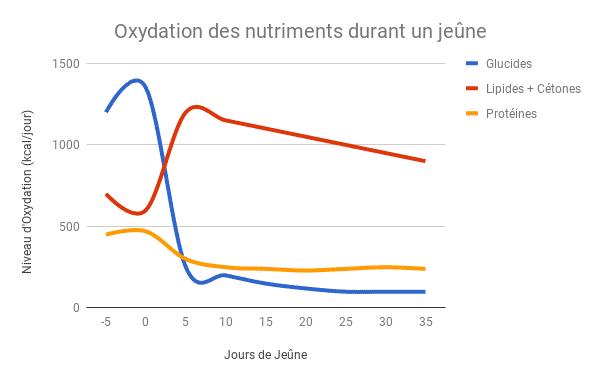 Oxydation-des-protéines-durant-le-jeûne-2-Santé-dAcier