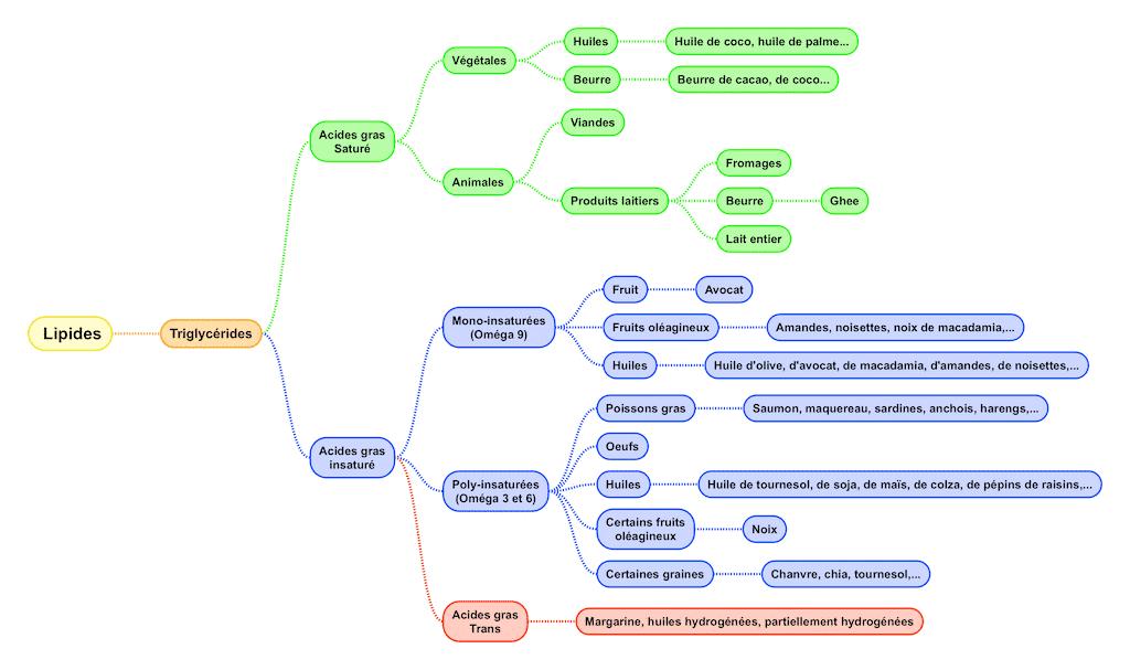 Mindmap de tous les types d'acides gras - Santé d'Acier