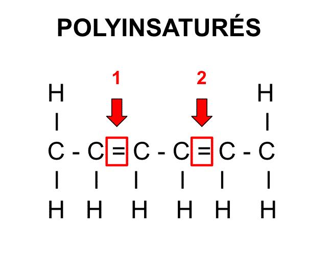 """Molécule d""""acides gras polyinsaturés - Santé d'Acier"""