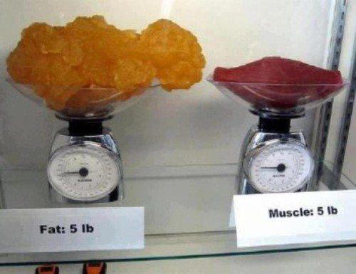 Différence de volume entre la graisse et le muscle - sante dacier